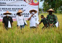 Bambang Soesatyo Menghadiri Pane Raya Beras di Cianjur