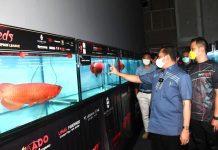 Bambang Soesatyo Melihat Ikan Hias Arwana